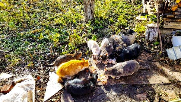 Отзывы о приюте для животных Друг - Госуслуги - Челябинск 30cf8ec243a56