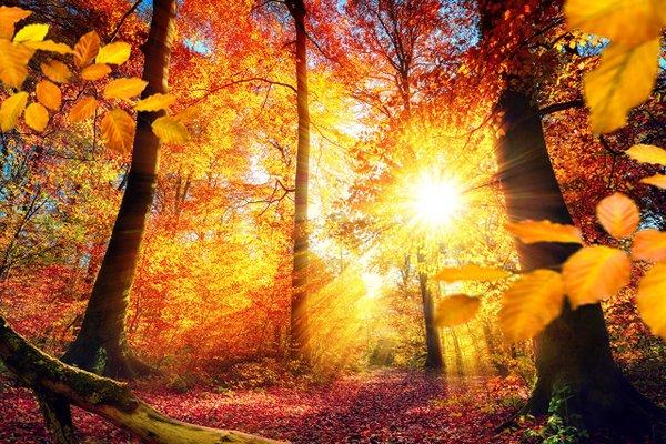 Кондитерское объединение Славянка (11.10.2017)  Доброго утра! Пусть  радость, улыбки и хорошее настроение будут спутниками вашего дня! 630bd4b9ae3
