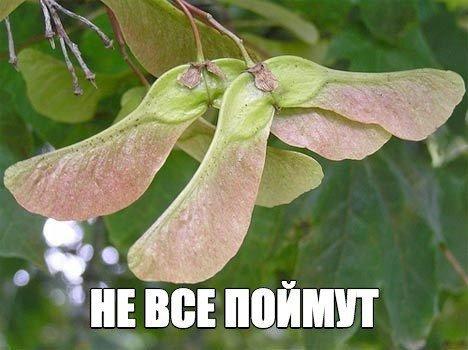 Агентство Брянск Диплом на улице Дуки С отзывы фото цены  Показать еще 1 фото