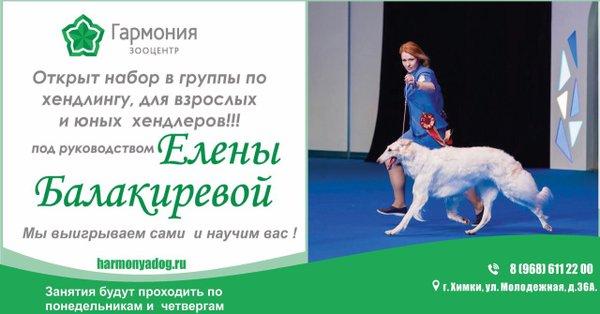 Кинологический клуб гармония москва клубы в митино москва